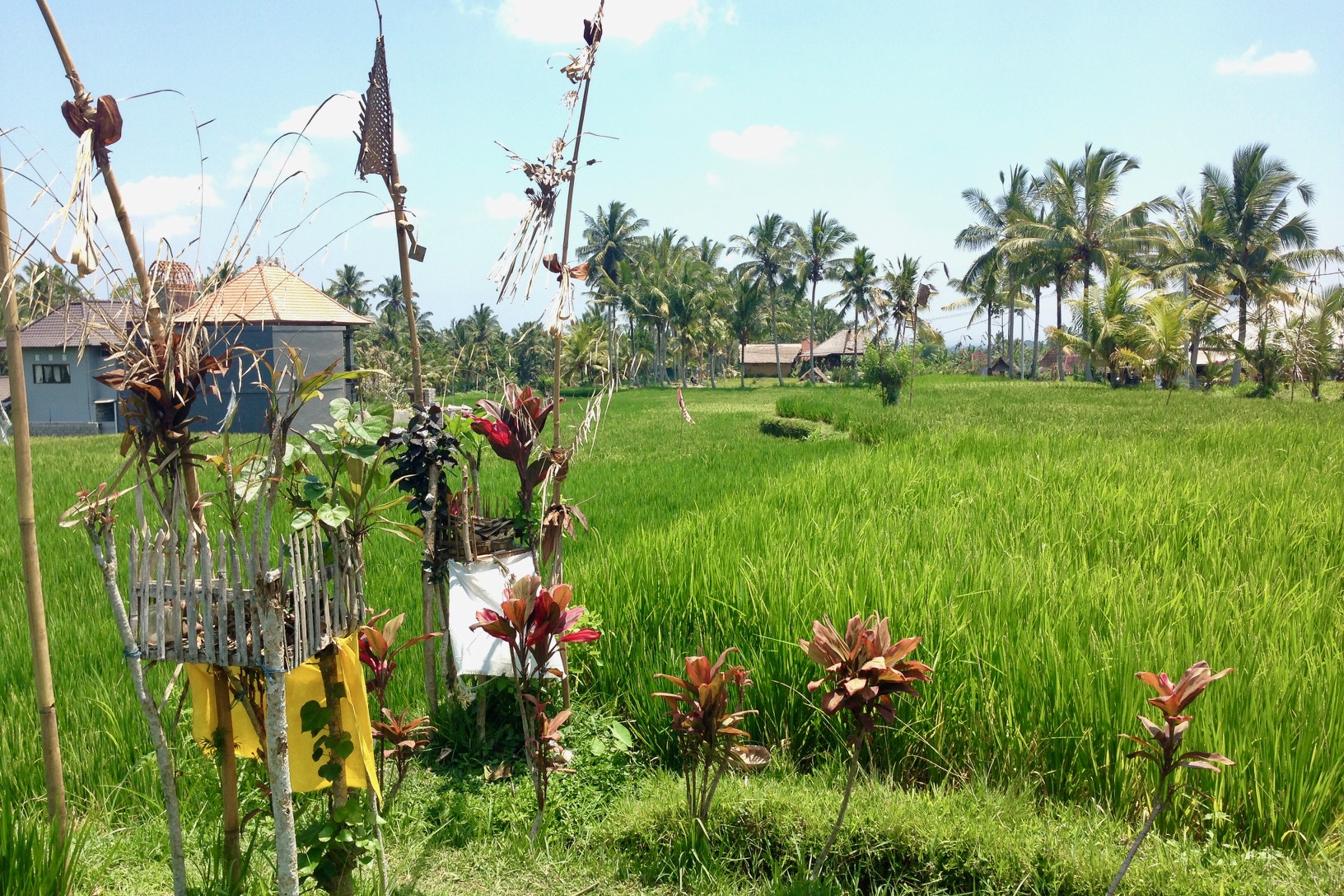ubud, rijstveld wandeling