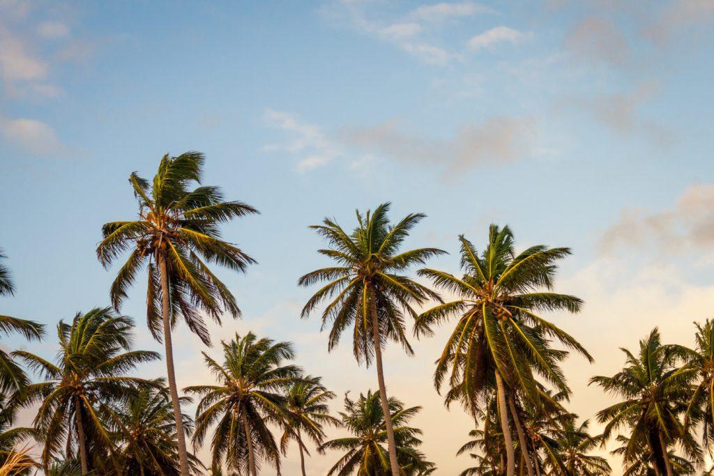 i love bali shop, palmbomen